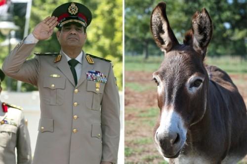 sisi-donkey